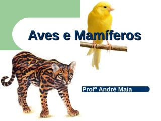 Aves e Mamíferos.ppt